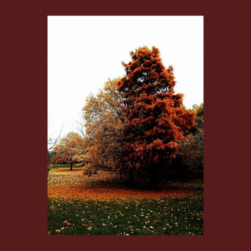 'a who-like tree in autumn' Print